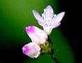小さな花を大きく撮って背景をぼかすマクロ撮影の簡単な方法