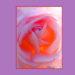 バラは沢山の表情を持っている。どの表情を引き出すかが、バラの花の撮影の面白さと僕は思ったの
